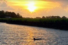 sunrise-dolphin-tour